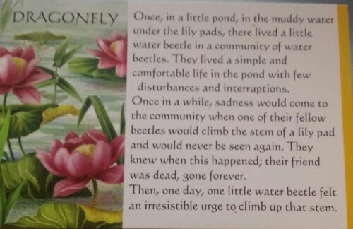 Story of The Dragonfly